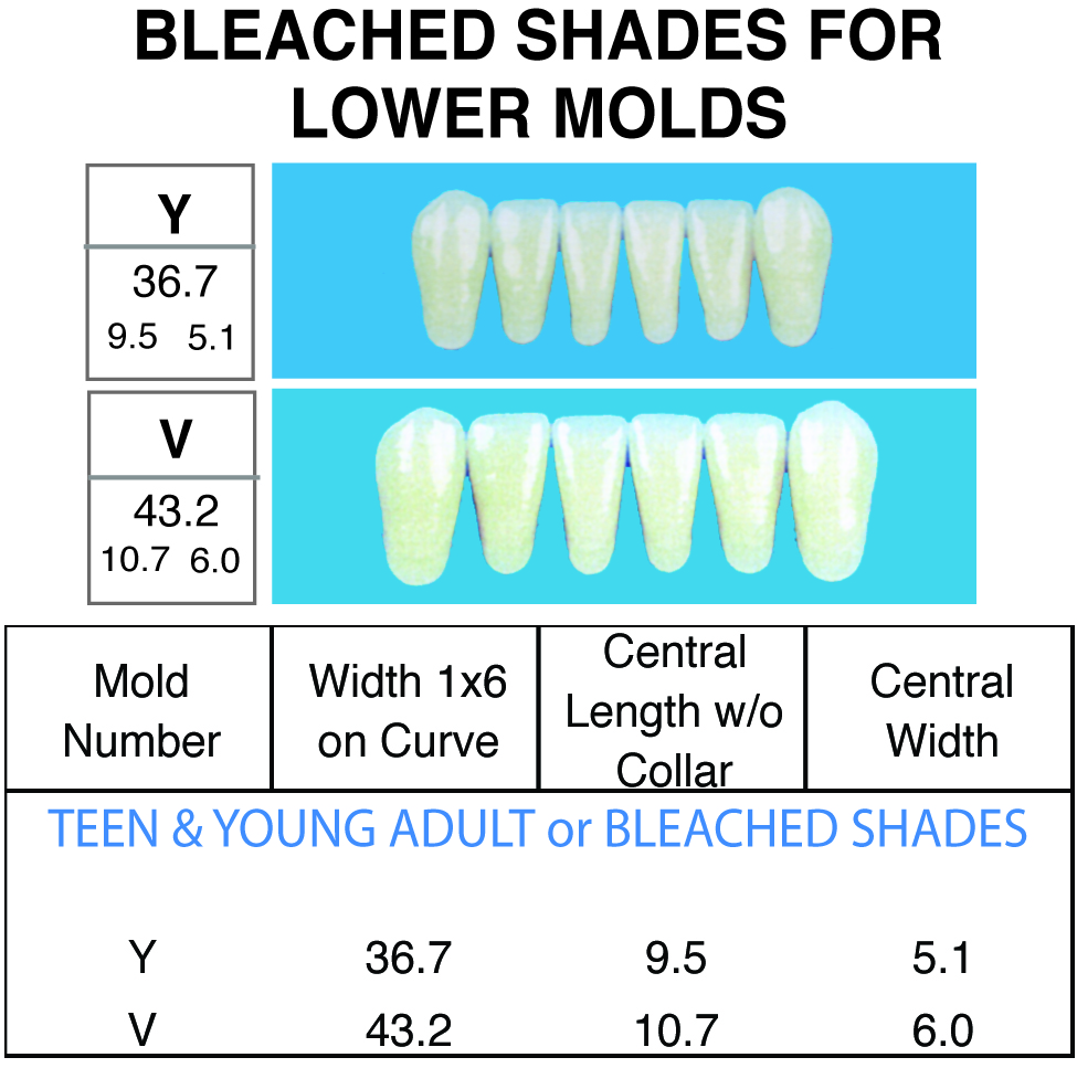BLEACHED SHADES--Lower 1x6 Anteriors