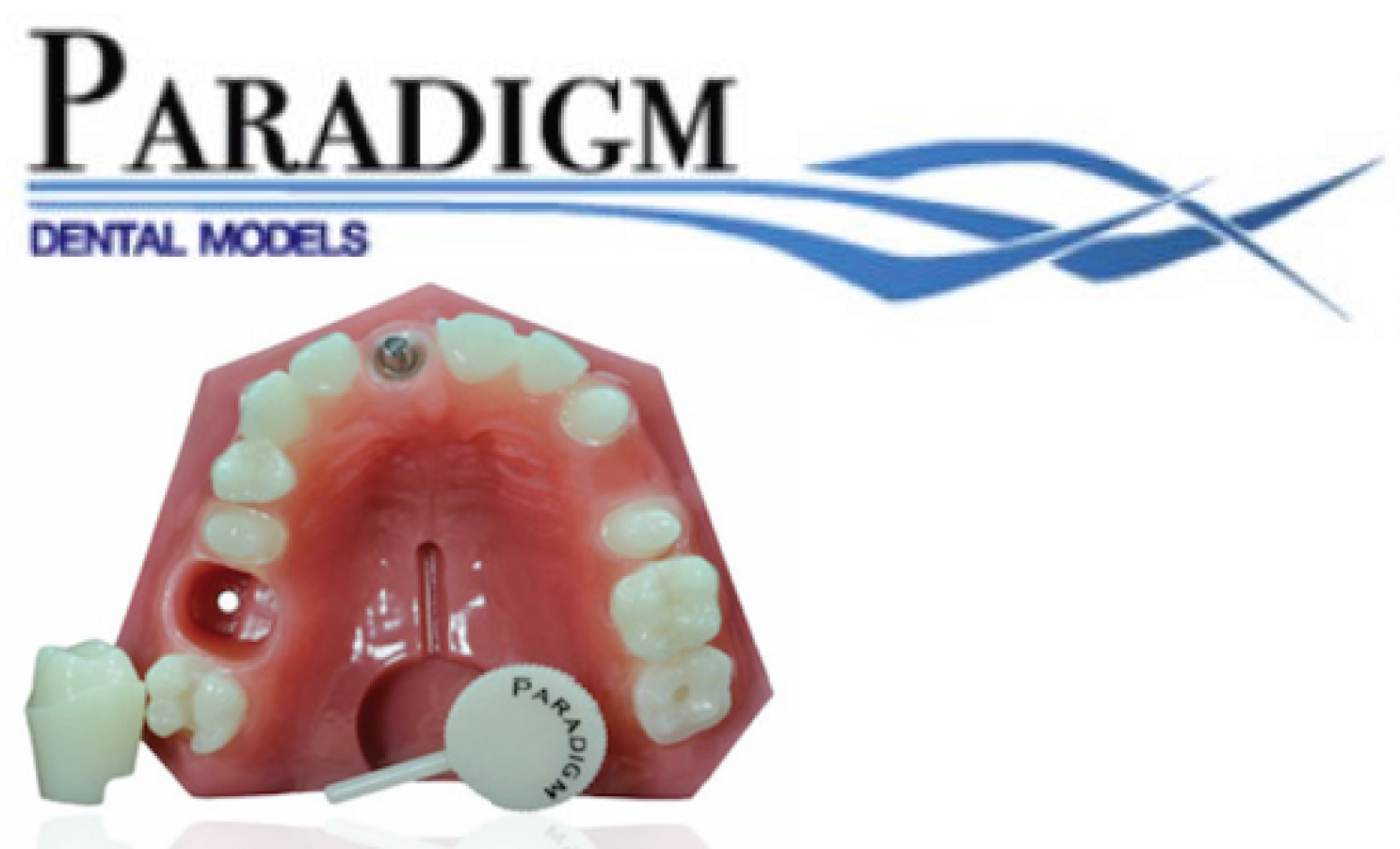 Paradigm Dental Models